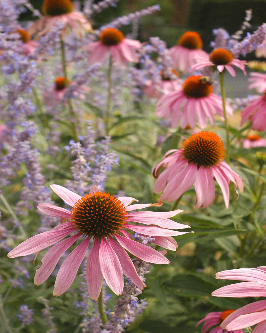 010-flowers-0869.jpg